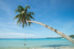 Swing hang from coconut tree over beach Stock Photography