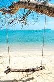 Swing hang from  tree over beach sea Royalty Free Stock Photos