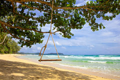 Swing hang from tree over beach sea Royalty Free Stock Photo