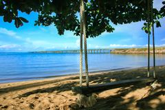 Swing hanging on the beach tree. stock image