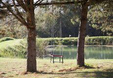 The Swing Stock Photo