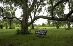 Swing Hanging in Tree. Quilt covered swing hung in a 100 year old pecan tree Stock Photo