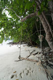 Swing hanging under the tree and footprints on a beach of tropical island Stock Image