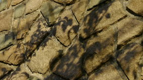Swing leaves silhouette shadow on stone wall. stock video