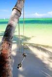 Swing on palm tree Stock Image