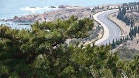 Swing pine in wind,bicycle sport on seaside road. stock footage