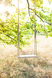 The swing. Swing on ropes under the big tree Stock Photos