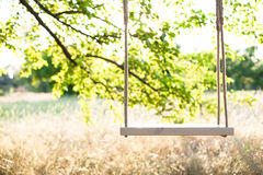 The swing. Swing on ropes under the big tree Stock Images