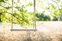 The swing. Swing on ropes under the big tree Royalty Free Stock Photo