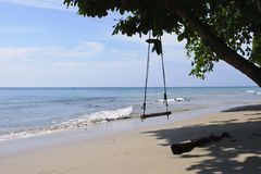Swing on a tree on the beach Stock Image