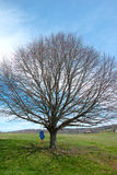 Swing on Tree in a field. Took this picture on Easter day. Its a lone tree in a field with a swing on it Stock Photo