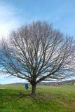 Swing on Tree in a field Stock Photo