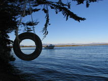 Swing tyre at the lake. Swing tyre at lake Ellesmere, Canterbury, New Zealand stock image