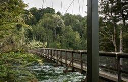 Swingbridge bij Kepler-spoor in Te Anau stock afbeelding