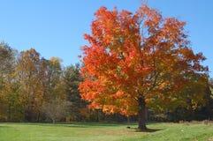 swinggummihjultree royaltyfri fotografi