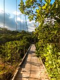 Jungle Scene with A Suspension Bridge Vanishing Into Nowhere royalty free stock images