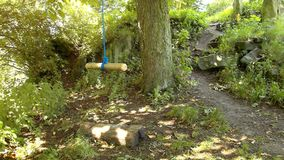 Swinging empty children's swing on old tree. Sunny spring morning, fresh green forest stock video footage