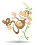 Swinging Monkey. Happy Monkey swinging from a jungle vine Royalty Free Stock Images