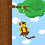 Swinging monkey Stock Photo