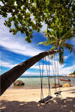 Swings and palm Royalty Free Stock Images