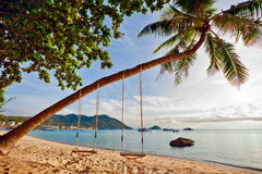 Swings and palm Royalty Free Stock Image