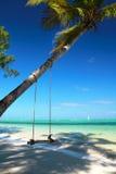 Swings on palm Stock Photos