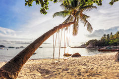 Swings and palm on the sand tropical beach. Stock Image