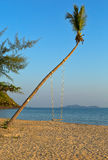 Swings on palm on tropical beach Stock Photography