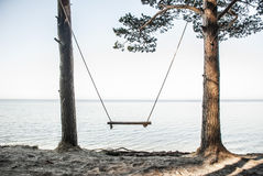 Swings on sea coast. Attached to pines Stock Photos