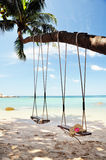 Swings tied to a palm tree Stock Photo