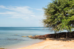 Swings and tree on the beach. Royalty Free Stock Photography