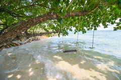 Swings under a tree by the sea Royalty Free Stock Photo