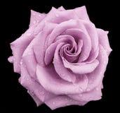 Swirl Royalty Free Stock Image