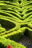 Swirling box hedges Stock Photos
