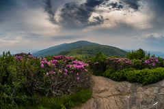 Swirling Clouds Over Jane Bald with Rhododendron. As sunset light begins to creep into the sky royalty free stock images