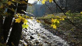 The Swirling Stream stock footage