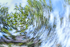 Swirling tree and sky Stock Images