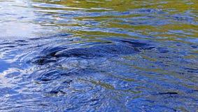 Swirling Water Around Rock Royalty Free Stock Image
