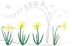 Swirls background with daffodils Royalty Free Stock Photography