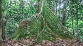 Swirly树基地 免版税库存图片