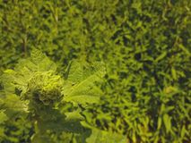 Swirly planta original da folha imagens de stock royalty free