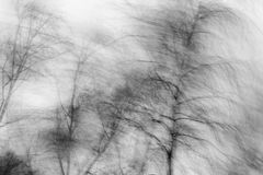 Swishing береза в ветре Стоковое фото RF