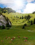 Swiss alp europe. Landscape in the Swiss Alps in Europe Royalty Free Stock Images