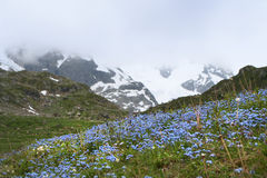 Swiss alpine hill. Nice natural landscape in swiss Alps stock photos