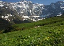 Swiss alpine hills stock images