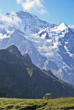 Swiss Alps. Scenic view of the Eiger, Monich and Jungfrau summits in the Swiss Alps (from Mannlichen view point Stock Photo