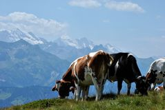 Swiss alps. View of the Jungfrau massive Stock Photo
