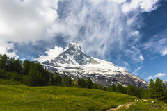 Swiss Alps. Alpine meadow with flowers daisies and blue sky in the Swiss Alps Stock Images