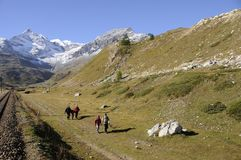 Swiss alps: Bernina Hospitz Hiking & Biking Region in the Upper. Hiking in the magnificant mountain-region Oberengadin in the Swiss alps Royalty Free Stock Photography