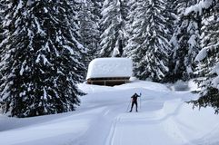 Swiss alps cross-country skiing. Swiss alps, cross-country skiing after heavy snowfall in the forest Royalty Free Stock Image